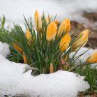 Лунный посевной календарь на март 2018 года садовода и огородника