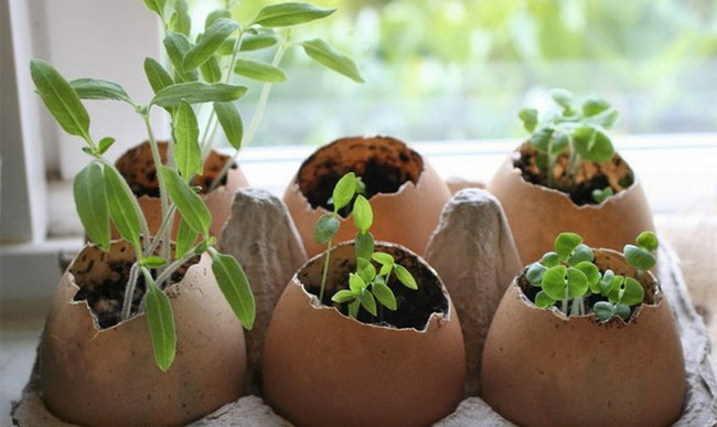 Яичная скорлупа как удобрение для каких растений