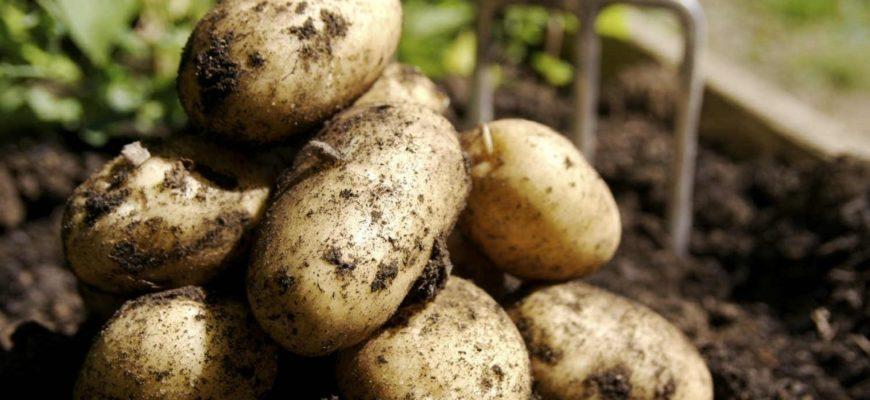 Как быстро выкапывать картошку