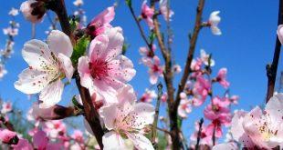 Лунный посевной календарь на апрель 2018 года садовода и огородника