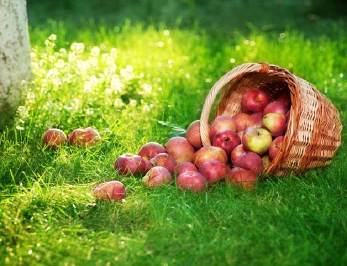Лунный посевной календарь на август 2018 года садовода и огородника
