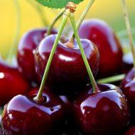 Чем подкормить черешню осенью?