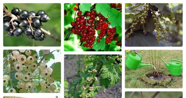 Чем подкормить плодовые деревья и кустарники осенью?