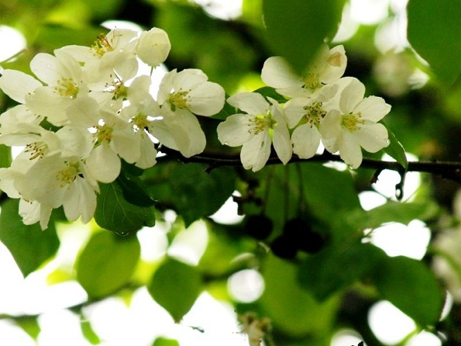 Лунный посевной календарь на май 2018 года садовода и огородника
