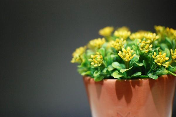 Мошки в цветочных горшках: как избавиться?