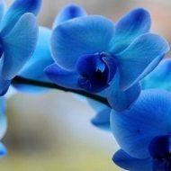 Орхидея: уход в домашних условиях после покупки