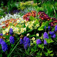 Какие многолетние цветы сажают осенью?