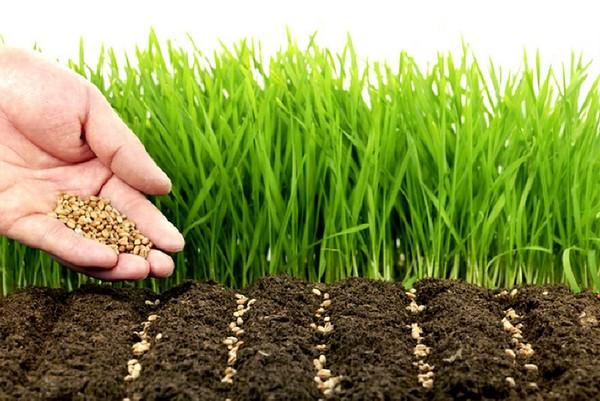 Чем удобрить почву осенью?