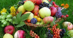 Лунный посевной календарь на сентябрь 2018 года садовода и огородника