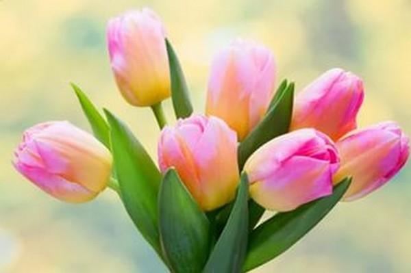 Когда выкапывать тюльпаны и как хранить до посадки осенью?