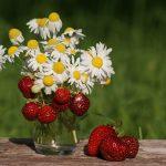 Лунный посевной календарь на июль 2018 года садовода и огородника