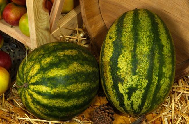 Как сохранить арбуз на зиму в домашних условиях
