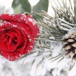Лунный календарь на декабрь 2018 года цветовода