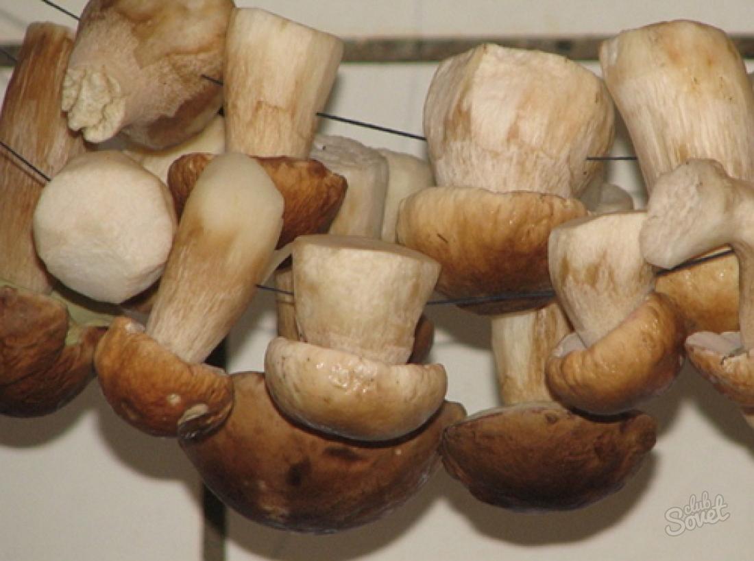 Как сохранить грибы свежими?