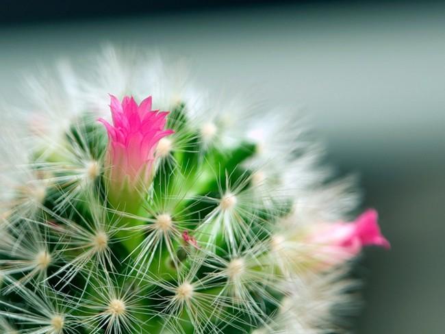 Как часто поливать кактусы в домашних условиях