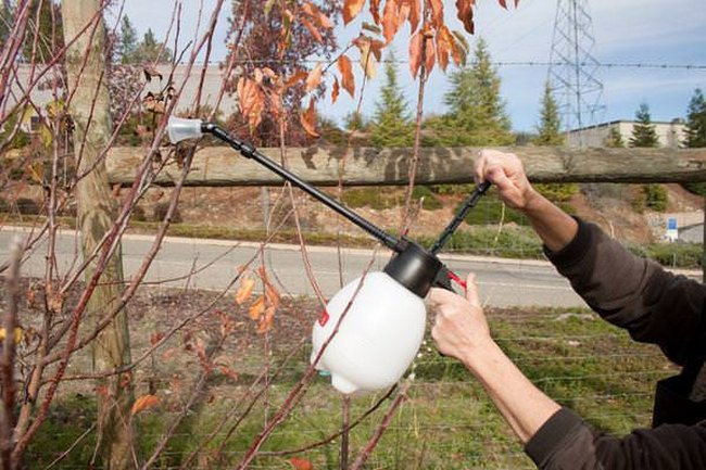 Осенняя обработка сада мочевиной и железным купоросом