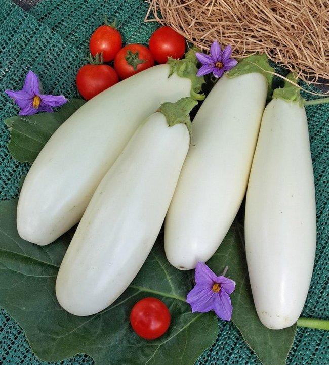 Баклажан белый сорта