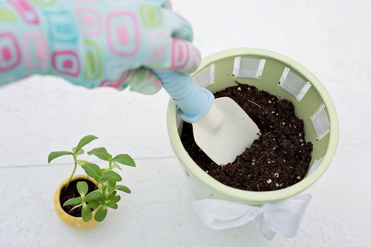 Эустома посев семян на рассаду