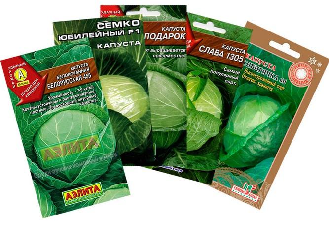 белокочанная капуста как выращивать