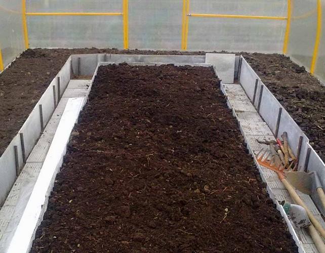 Как вырастить рассаду поздней капусты в теплице