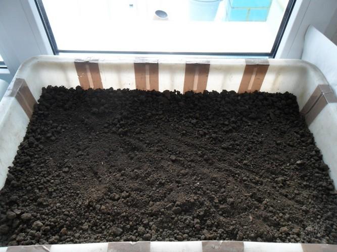 Когда сеять клубнику семенами на рассаду