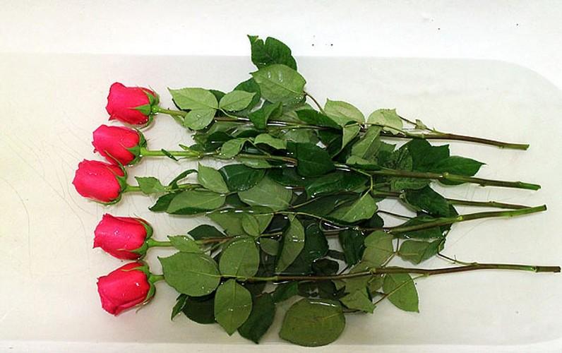 Как дольше сохранить срезанные розы в воде?