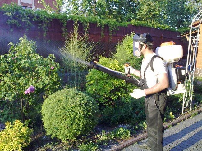 Обработка кустарников весной от вредителей и болезней