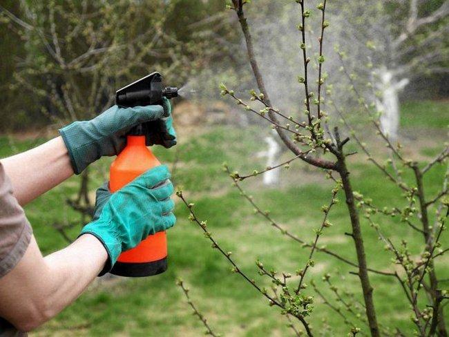 Обработка сада от вредителей весной