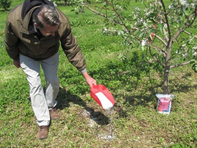 Обработка сада весной мочевиной