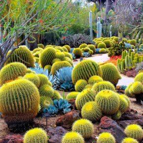 Виды кактусов: фото и названия на русском