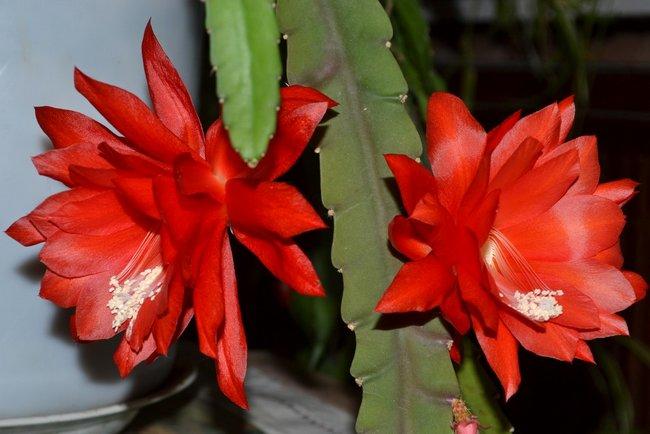 Виды кактусов фото и названия на русском