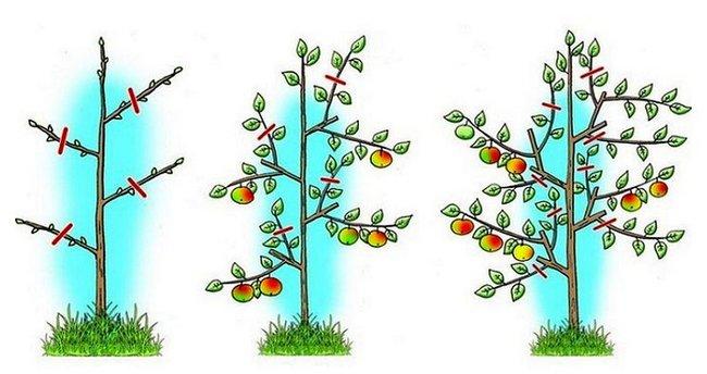Обрезка молодых деревьев весной видео для начинающих