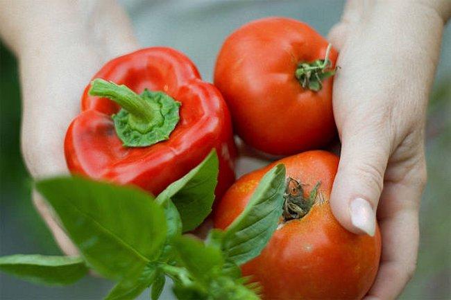Удобрение для рассады томатов и перца