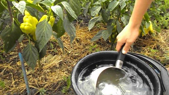 Жидкие удобрения для рассады