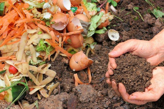 Подкормка картофельными очистками
