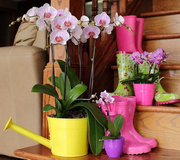 """Орхидея """"Цимбидиум"""": фото, уход в домашних условиях"""