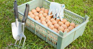 Подготовка картофеля к посадке весной обработка