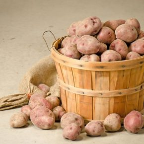 Посадка картофеля по методу Митлайдера