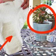 Использование памперсов в огороде