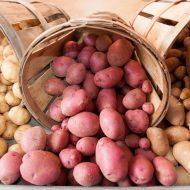 Болезни картофеля: описание с фотографиями и способы лечения