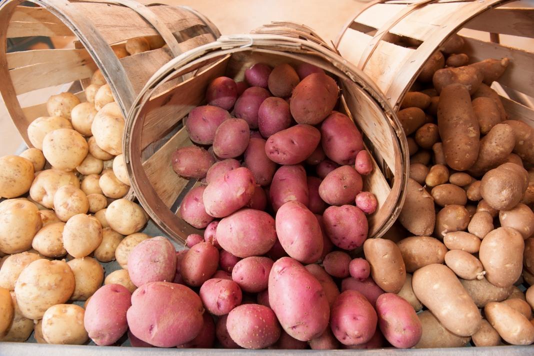 Болезни картофеля описание с фотографиями и способы лечения