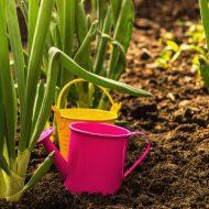 Чем обработать лук от болезней и вредителей?