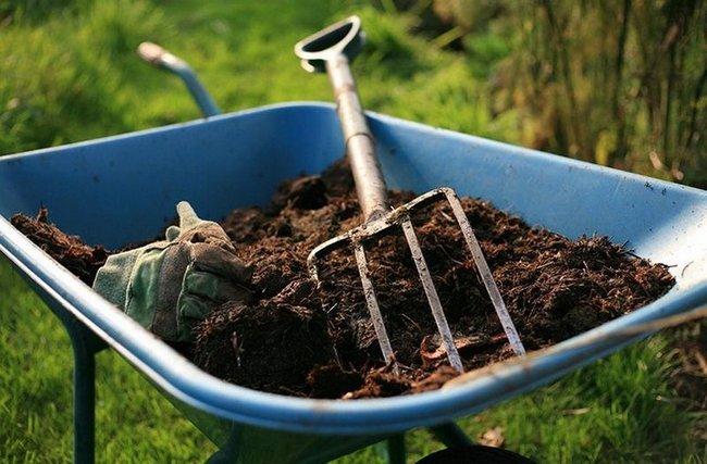 Чем подкармливать чеснок для хорошего урожая