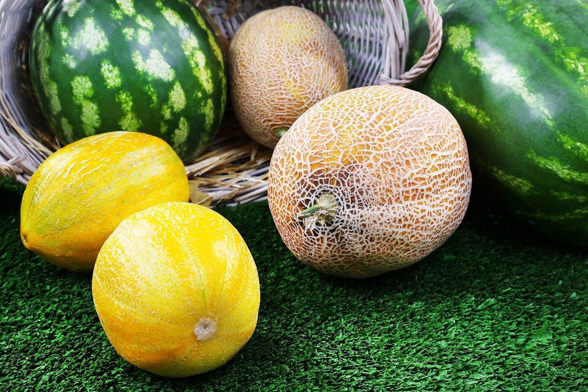 Чем подкормить дыни и арбузы желтеют листьяЧем подкормить дыни и арбузы желтеют листья