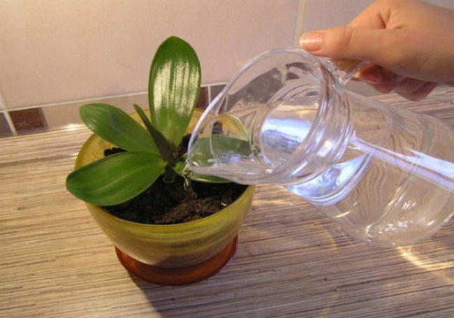 Янтарная кислота для комнатных растений в таблетках как применять
