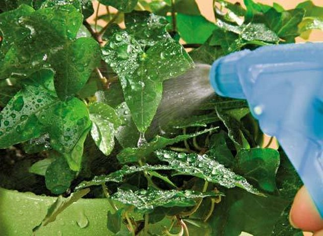 Йод для растений как удобрение