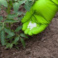 Селитра кальциевая: удобрение, применение на огороде