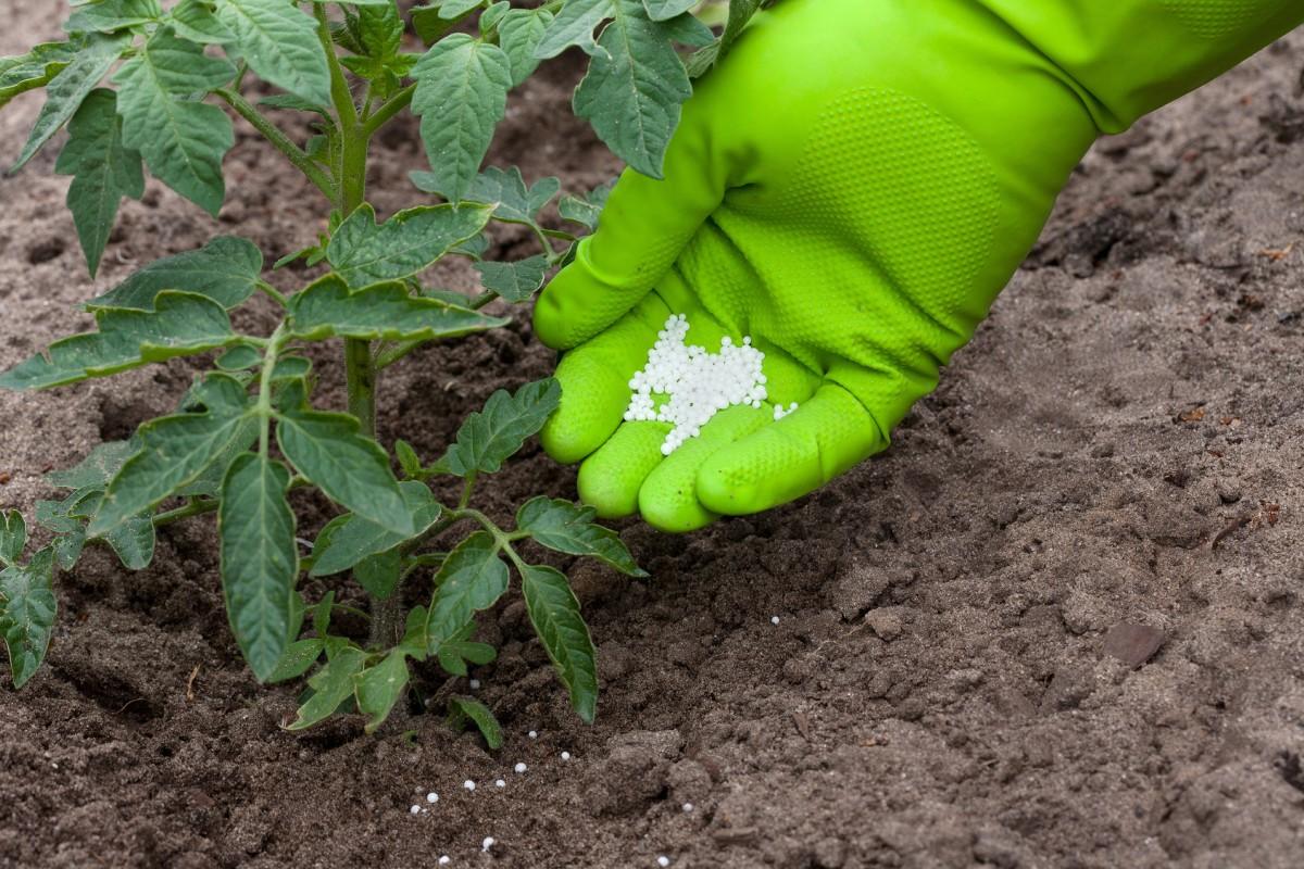 Селитра кальциевая удобрение применение на огороде