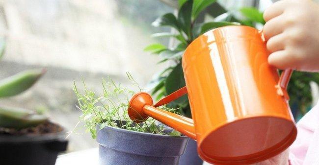Бор для растений опрыскивание