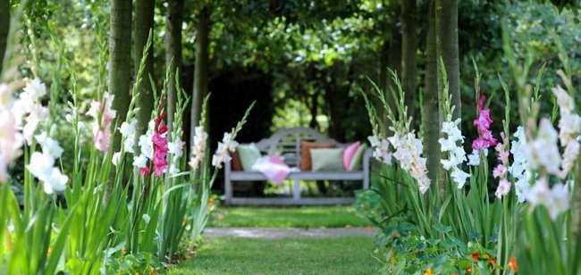 Что делать после цветения гладиолусов